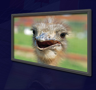 Ostriches Don't Like Fees Either
